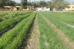 Agronomy Farm 2