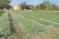 Agronomy Farm 3