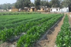 Agronomy Farm 4