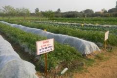 Horticulture Farm 2