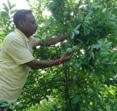 Horticulture Farm 3